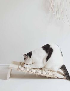 Cats Toys Ideas - diy grattoir chat - Ideal toys for small cats Best Small Pets, Small Cat, Siberian Cats For Sale, Ideal Toys, Kitty Games, Cat Scratching Post, Cats Bus, Mundo Animal, Cat Furniture