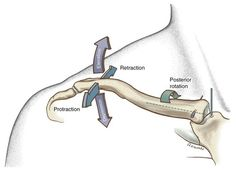 Osteokinematics of the right sternoclavicular joint