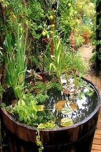Why You Should Invest In Simple Water Features For Your Home Garden – Pool Landscape Ideas Small Water Gardens, Container Water Gardens, Container Gardening, Patio Pond, Garden Pool, Pond Design, Garden Design, Small Water Features, Garden Tool Shed