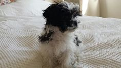 Milly Dogs, Animals, Animales, Animaux, Pet Dogs, Doggies, Animal, Animais