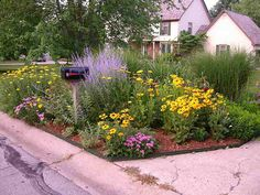 Russian sage, black-eyed Susans, and yarrow anchor this mailbox garden.