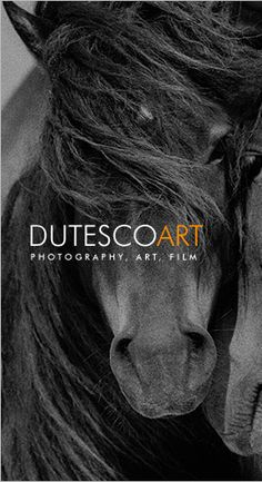 Roberto Dutesco's amazing photos of the wild horses of Sable Island.   The island is off the coast of Halifax and the only human living there is the lighthouse keeper.  Check out his amazing photos and videos.  And if you're in NYC, visit his gallery.  Truly a moving experience