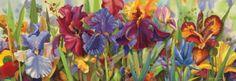 1,000 Pc Panoramic Puzzle Iris Cantata Nancy Dunlop Cawdrey
