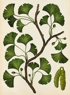 Beautiful Biology: Illustrations by Katie Scott | Daily design inspiration for creatives | Inspiration Grid Illustration Botanique, Plant Illustration, Botanical Illustration, Plant Aesthetic, Aesthetic Drawing, Duranta, Calathea Plant, Pothos Plant, Paradise Plant