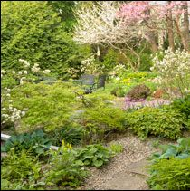 Woodland Style Shade Gardening - Article from Lee Valley Newsletter
