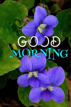 Good Morning Beautiful Pictures, Good Night I Love You, Good Morning Picture, Morning Pictures, Good Morning Images, Good Morning People, Good Morning Flowers, Good Morning Good Night, Good Morning Wishes