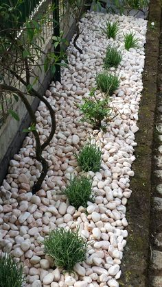 Fantastic front yard landscaping ideas can change your house's visual charm. Your front yard style can significantly impact the means your residence looks from the outside #frontyardlandscapingdesigns #frontyardlandscapingdesignplans #frontyardlandscapingwithbricks #frontyardlandscapingideasmichigan #frontyardlandscapingideasaustralia