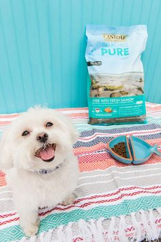 CANIDAE® Grain Free PURE helps keep Nelly feeling good!  #sponsored #HealthyPetHappyPet © Alice G Patterson Photography   happy dog, Maltese