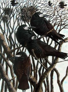 HOWARD TOWLL  Rooks at Kergord  remind me of the noisy rooks in the trees in Ireland. #questingmarilyn