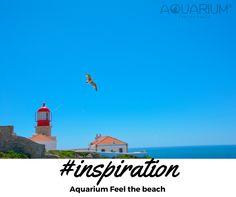 Aquarium Feel the beach #inspiration #aquariumfeelthebeach #beach #liberty #bird #love #amazing