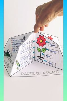 Student Gifts Discover All about plants. Spanish English català All about plants: Characteristics of plants Photosynthesis Parts of a plant Life cycle Classification of plants Plant Science Fair Projects, Science Experiments Kids, Science Lessons, Science Activities, Classroom Activities, Activities For Kids, Photosynthesis Activities, All About Plants, Interactive Notebooks