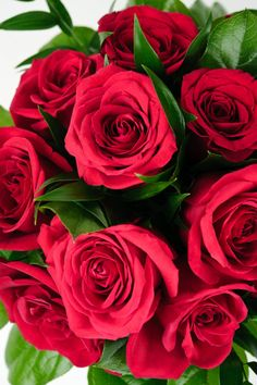 Red roses for your Valentine ♥ Visit Lashings Extensions on Facebook to join their Valentine's Day Competition. http://facebook.com/LashingsExtensions  #ValentinesDay #Lashings #Competition