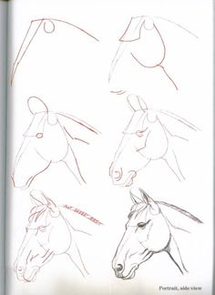 How-To-Draw-Horses - ~*Horse Heaven*~ (CE)