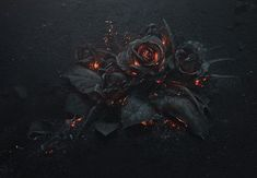 A Smoldering Bouquet of Roses Photographed by Ars Thanea