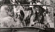 Poster of Brigitte Bardot driving her Mini Moke with her dogs displayed in the exhibition in St Tropez