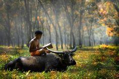 « Le garçon et le buffle » une photographie de Pimpin Nagawan