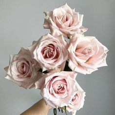 Simple Shopping Lovely Wedding Flowers Guide - Immediate Advice In Getting Lovely Wedding Floral Decor - For Adults - Sunpapire Weddings Wedding Flower Guide, Diy Wedding Flowers, Floral Wedding, Wedding Bouquets, Garden Roses Wedding, Fall Bouquets, Rose Wedding, Blush Roses, Blush Pink