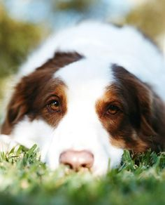 Dog ...........click here to find out more http://googydog.com