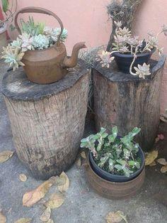 Pin by Susanna Cummins on Wood rounds Broken Pot Garden, Garden Pots, Planting Succulents, Planting Flowers, Garden Mirrors, Hardy Plants, Wood Rounds, Cactus Y Suculentas, Interior Plants