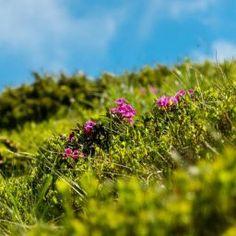 Muntele Rosu Visit Romania, Plants, Plant, Planets