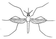 etiquetas de mosquitos - Cerca amb Google