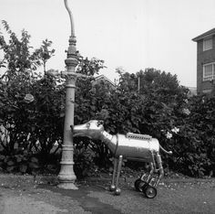 1981 Arfur, a robotic dog invented by Steve Brooks of London. It took nine months and £2,000 to build.