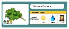 Sazona tu mesa de cultivo con fresca albahaca: http://ecohortum.com/como-cultivar-albahaca/