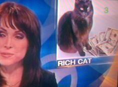 If I was a rich cat MEOWMEOWMEOWMEWOMEOWMEOWMEOWMEOW RIP http://meow-money-meow-problems.tumblr.com/