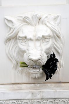 Black flowers and white lion