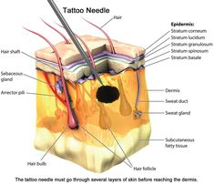 3 Tattoo Healing Stages and Precautions Flame Tattoos, Old Tattoos, Sexy Tattoos, Tattoo Needles And Ink, Tattoo Care, 3 Tattoo, Tattoo Kits, Learn To Tattoo, Tattoo Apprenticeship