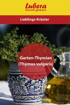 Unser Garten Thymian Thymus vulgaris ist perfekt für einen eigenen Kräutergarten geeignet. Aber auch als Duftpflanze oder Bienenweide macht er sich nicht schlecht. Mehr Infos und Tipps finden sie in unserem Shop ↓  ↓  ↓ ↓  ↓  ↓ ↓  ↓  ↓ ↓  ↓  ↓ _______________________________________________________#garten #thymian #kräuter #beet #gärtnern #pflanzen #lubera #duft #bienen #kochen #diy Kraut, Large Plants, Roots, News, Backyard Landscaping, Tips, Bees, Cooking