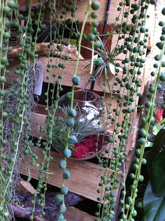 Hanging terrariums are very cool!