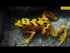 The Unseen Rare Pics of Rarest & Weirdest Frogs