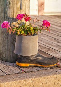 Als Pflanzer hilft diese Gumboot bis die Strahlkraft der rosa Blüten über dumpfe farbigen hölzernen Hintergrund spielen.