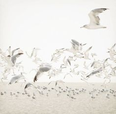 Seagulls (scheduled via http://www.tailwindapp.com?utm_source=pinterest&utm_medium=twpin)