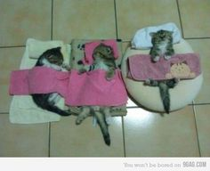THEYZ JUST HAZZING SLEEPOVERZ