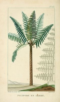 Free Download: Botanical Palm Tree Prints | Poppytalk