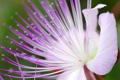 che cappero di fiore!!!