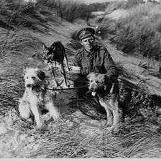 War dogs. | The Most Powerful Images Of World War I - British messenger dogs with their handler, France