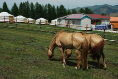 Airbnb: Mongolia Horse Riding Club in Terelj