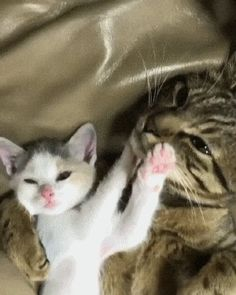 Hey mama! Check out my gaw-geous pink jellybeans!