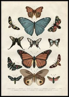 Discover this textbook example of a vintage poster! All jokes aside, these beautiful butterflies were illustrated initially as early as Now they act as a lovely motif to hang on your wall! Match successfully together with Vintage Insects and Vintage Illustration Papillon, Illustration Botanique Vintage, Art Illustration Vintage, Butterfly Illustration, Butterfly Drawing, Butterfly Painting, Vintage Drawing, Butterfly Wallpaper, Vintage Artwork