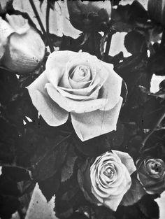 Flores Blanco Y Negro