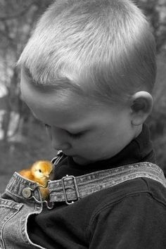 yellow chickie,,,color splash,,,