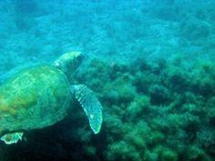 Tauchen im Winter auf Kreta Holiday News, Greece Holiday, Crete Greece, Turtle, Island, Beach, Pictures, Animals, Diving