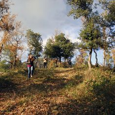 El bosc ple de ninfes de la fotografia Country Roads, Scenery, Photos