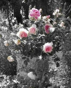 Rose petals and sweat! Beautiful Roses, Pretty In Pink, Beautiful Flowers, Black And White Colour, Black And White Pictures, One Color, Color Pop, Color Splash Photo, Splash Images