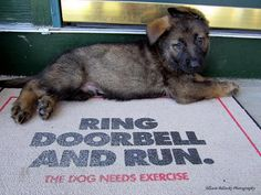 German Shepherd Ring doorbell and run