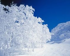 There are some places you can see this beautiful winter scenery in Japan. This is breathtaking...