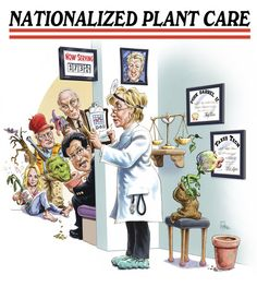 Since 1998, we are honored to have the Nationally Awarded (multiple Reuben Award Winner) cartoonist Jack Pittman to draw our mail order plant catalog covers. Description from plantdelights.com. I searched for this on bing.com/images